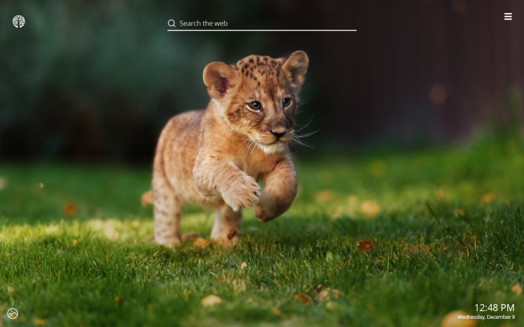 Baby Lions HD Wallpaper New Tab Theme