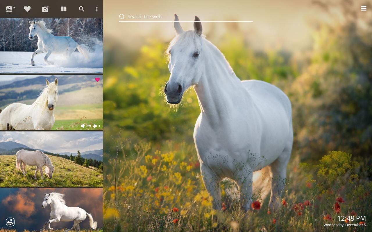White Horses Hd Wallpapers New Tab Impressive Nature